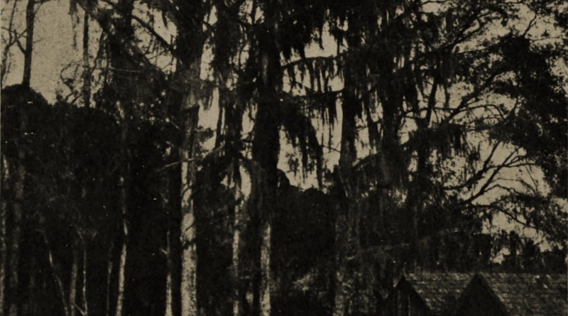 Trees by W. N. Hutt about 1908