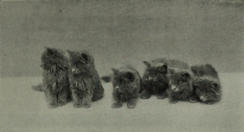 Cats by Helena C. Sutherland about 1908