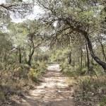 Bosque de La Vallesa