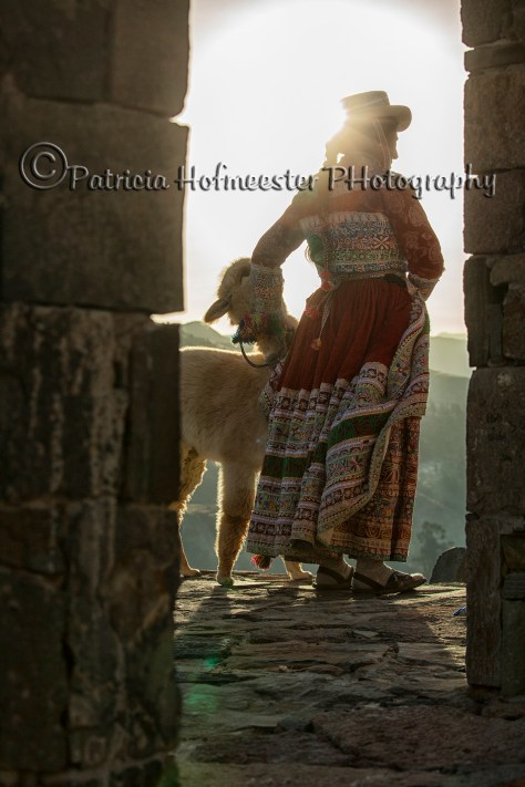 Native indian woman in traditional clothing with baby Alpaca in the Colca Canyon, Peru.
