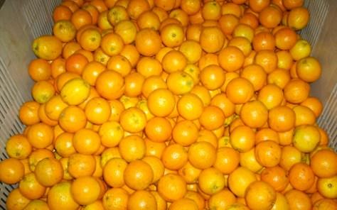So sollten frische Früchte aussehen