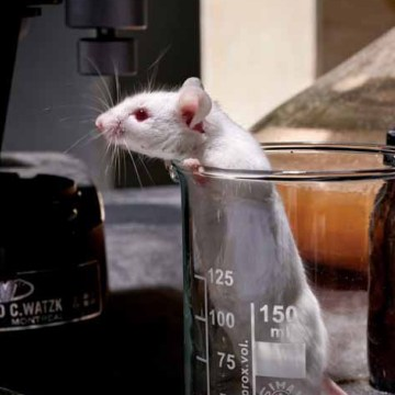 Last Days of the Lab Mouse