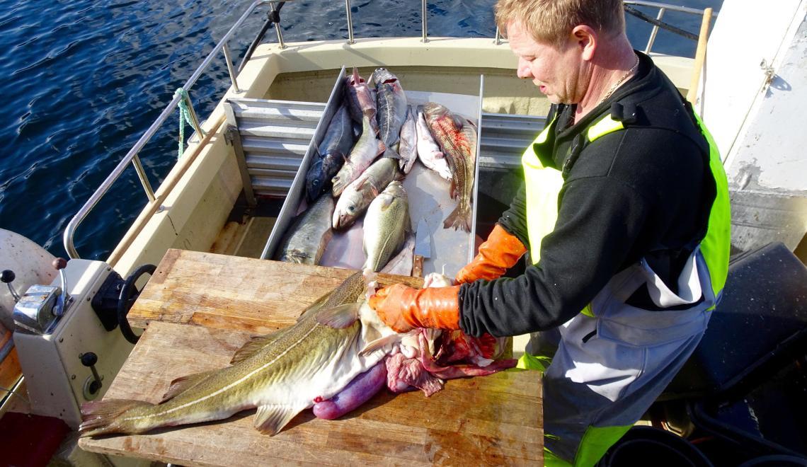 Fishing West Coast with Sea Eagle safari