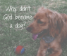 Why Didn't God Become A Dog_ Blog 2