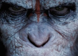 Dawn Of The Planet Of The Apes main