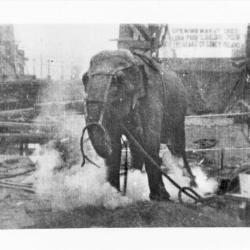 edison-electrocutes-topsy-the-elephant