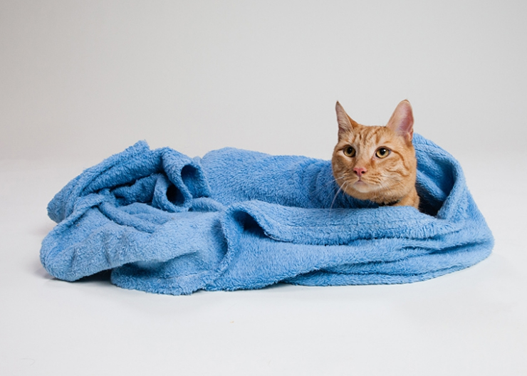 Can You Use Sterile Saline On Cats