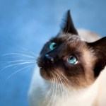 5 Things You Can Train Your Cat to Do