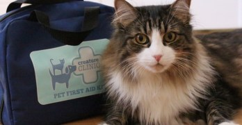 Be Prepared for a Pet Medical Emergency