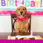 Can You Add Years to Your Dog's Life?