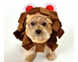 Dog's lion costume for halloween