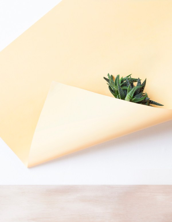 'paper/plant' photography series