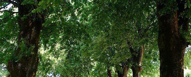 Arbre : Plantations trop rares ou inadaptées