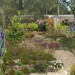 Etude d'un jardin sec méditerranéen en pente (Var)
