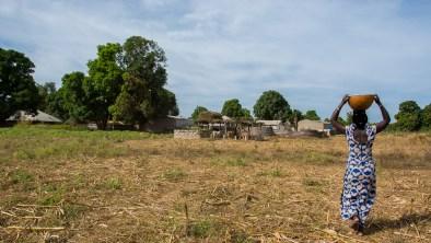 Transport du lait après la traite - Kolda - Sénégal