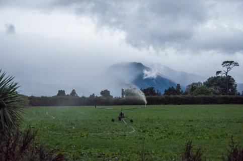 En parallèle du nettoyage des deux salles de traite, l'arrosage des pâtures se met automatiquement en route pour réutiliser l'eau tout de suite! - En savoir plus : http://paysansdavenir.com/le-coin-des-innovations-chevres-au-vert/