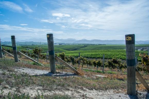 Des vignes à perte de vue chez Yealand - http://paysansdavenir.com/yealand-en-nouvelle-zelande-un-vignoble-pas-comme-les-autres/