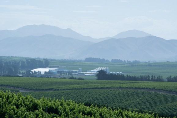 Dans le vignoble Yealand, les vignes écoutent de la musique pour mieux mûrir! - En savoir plus : http://paysansdavenir.com/yealand-en-nouvelle-zelande-un-vignoble-pas-comme-les-autres/