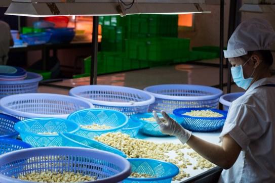 Tri à la main des noix de cajou - http://paysansdavenir.com/plongee-au-coeur-de-la-filiere-noix-de-cajou-de-binh-phuoc-vietnam/