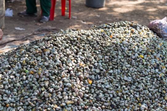 400 kg de noix de cajou - http://paysansdavenir.com/plongee-au-coeur-de-la-filiere-noix-de-cajou-de-binh-phuoc-vietnam/