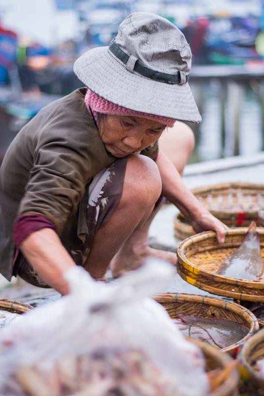 Tri et rangement des poissons à l'arrivée des pêcheurs - Hoi An