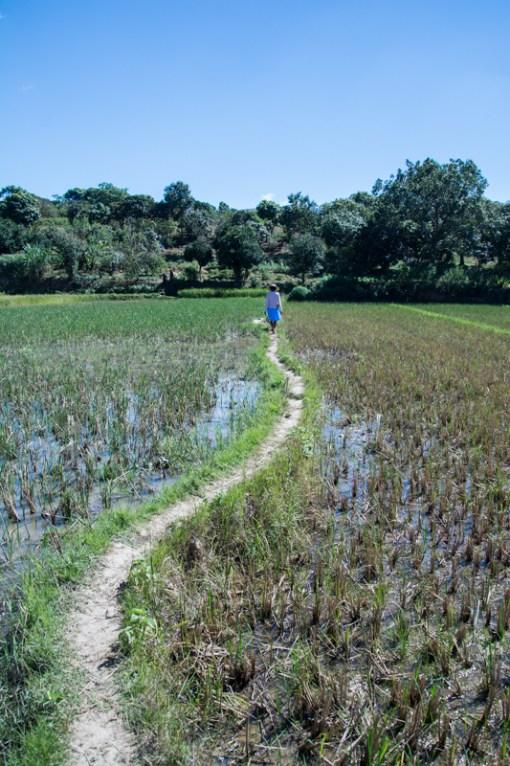 Suivons Suzanne à travers les rizières