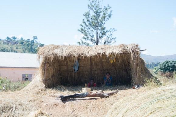 La récolte de riz: étape 5: A côté du lieu de battage, les familles construisent toujours un petit abris pour se protéger du soleil pendant les pauses
