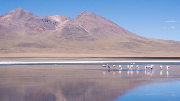Uyuni - les flamants roses ne semblent pas se rendre compte que l'eau est gelée!