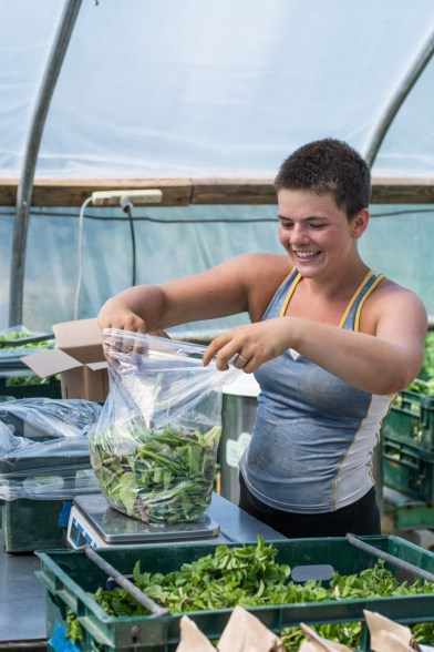 Little Seed Gardens, maraîchage et vente de paniers de légumes : Molley prépare son panier de légume