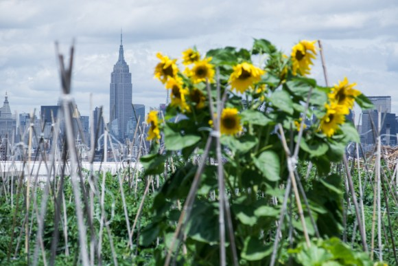 Brooklyn Grange Farm : Agriculture urbaine à New-York !