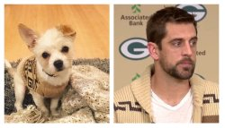 Small Of Aaron Rodgers Dog