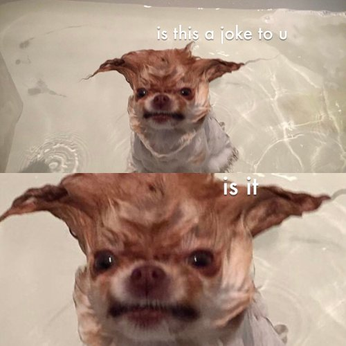Medium Of How Often Should You Bathe Your Dog