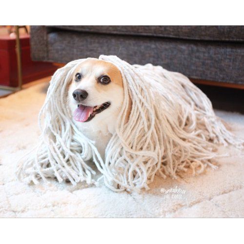 Medium Crop Of Dog That Looks Like A Mop