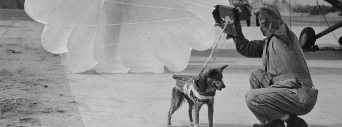 Parachuting Dogs