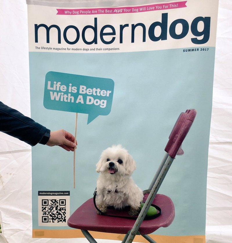 Large Of Modern Dog Magazine