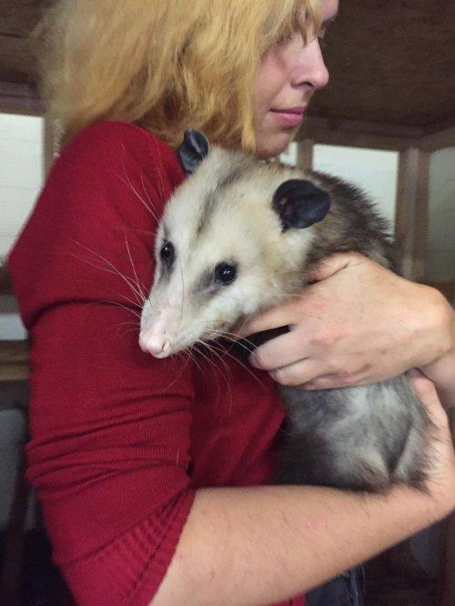 Medium Of Do Possums Bite