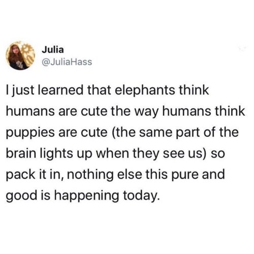 Medium Crop Of Do Elephants Think Humans Are Cute