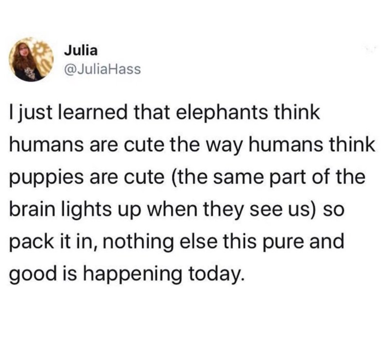 Large Of Do Elephants Think Humans Are Cute