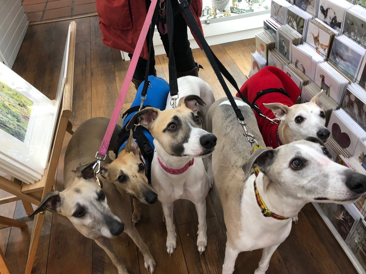 Unusual Warkworth Breed A Shop Company Westlake Breed Co Jobs Kai Co On Lot Today At Very Hound Friendly Do Visit When You Go Up Kai Co On Lot Today At houzz 01 Breed And Co