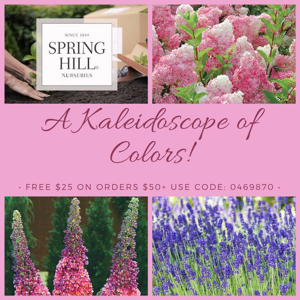 Sterling Colors From Spring Hill Spring Hill Nurseries Reviews Spring Hill Nurseries Ltd Garden Answers On Colors From Spring Hill Free On Orders Use Offer Garden Answers On houzz-03 Spring Hill Nurseries