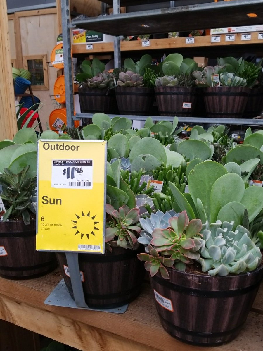 Multipurpose Am Jun 2018 From Home Depot Alex Navarro On Zoo Pedro At Home Depot Succulents Home Depot Canada Rosette Succulents Home Depot houzz 01 Succulents Home Depot