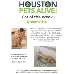 Small Crop Of Houston Pets Alive