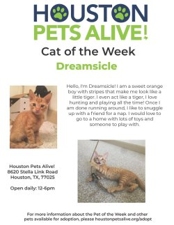 Small Of Houston Pets Alive