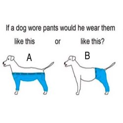 Small Crop Of If A Dog Wore Pants