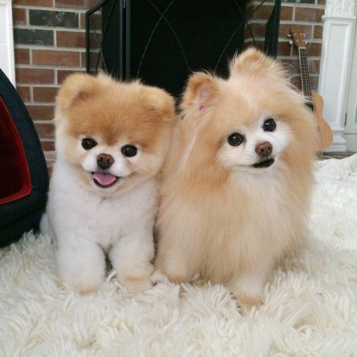 Fullsize Of Cutest Dog Ever
