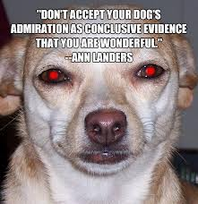 """""""Don't accept your dog's admiration as conclusive evidence that you are wonderful"""""""