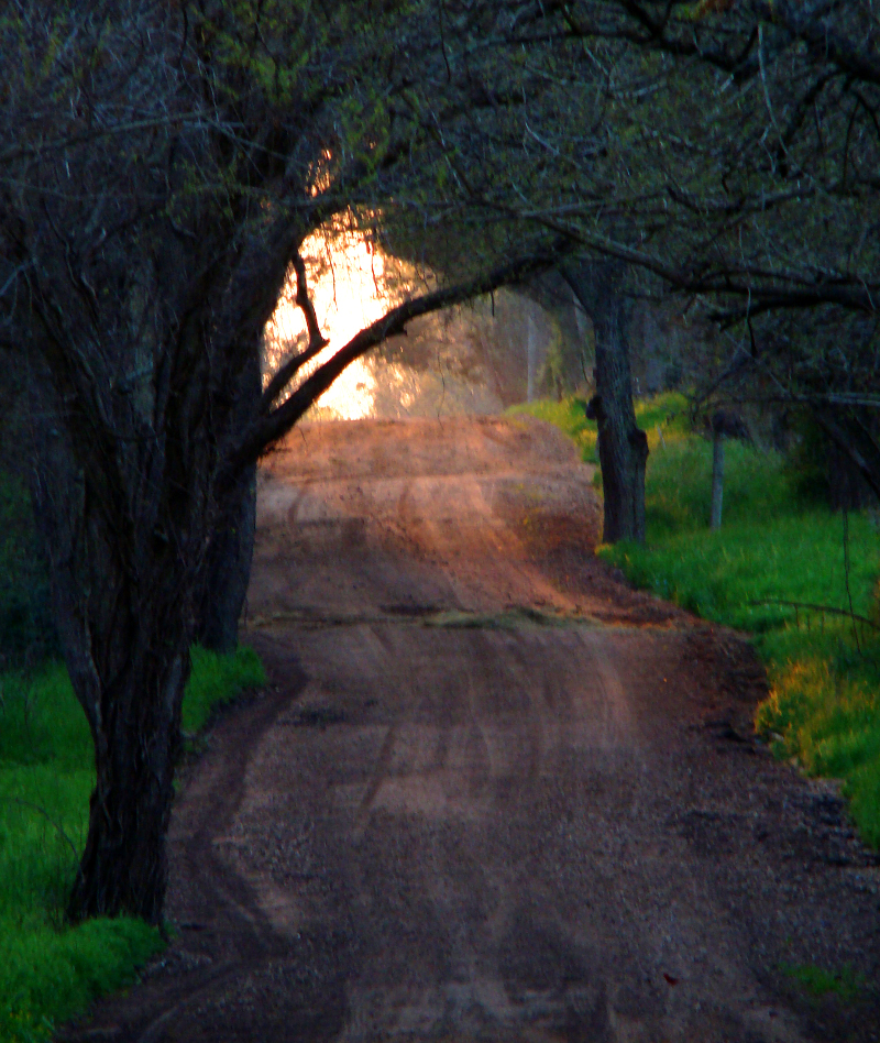 Up a Dirt Road by Christopher Woods