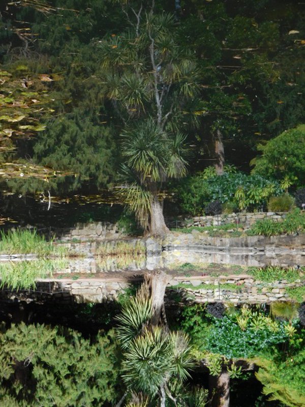 Greening by Jane Williams