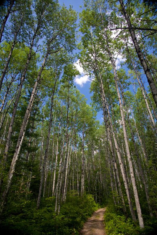 Aubrey Falls Trees