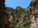 Canyon Gutturu Cardaxius